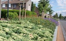 Kleurrijke groenverbinding in woonwijk Heerlen