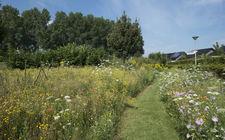 biodiversiteit in nieuwbouwwijk