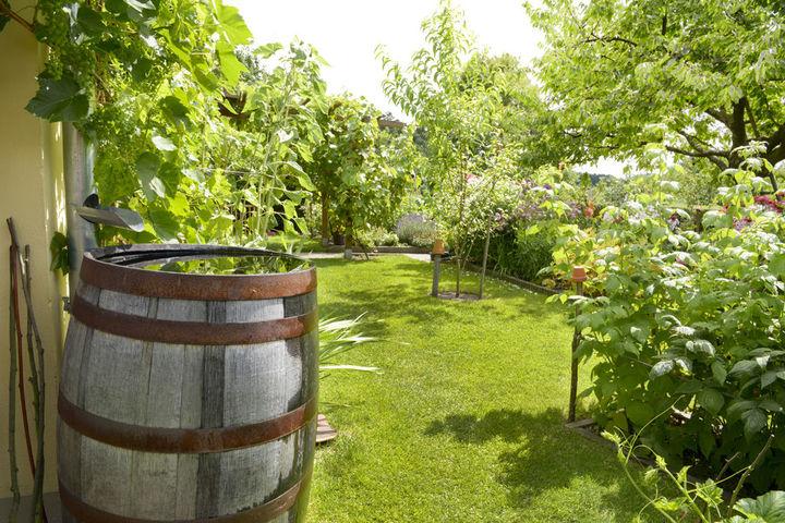 Wateroverlast Tuin Kleigrond : Maak uw tuin waterklaar