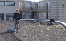 Aanleg groen-blauw-dak gemeente Landgraaf