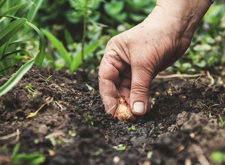 Bollen Bloeiend Voorjaar : Tuintip bloembollen planten