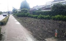Beugenseweg Boxmeer oude situatie met wegkwijnende oude rozen