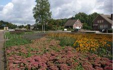 Green to Colour Beugenseweg Boxmeer zo'n 4 maanden na aanleg