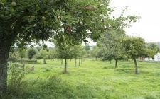 fruitbomen snoeien