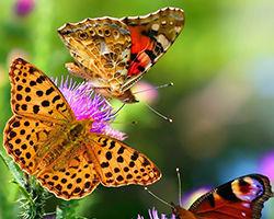 insectenvriendelijke tuin