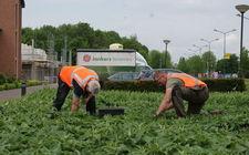 Onderhoud plantsoen