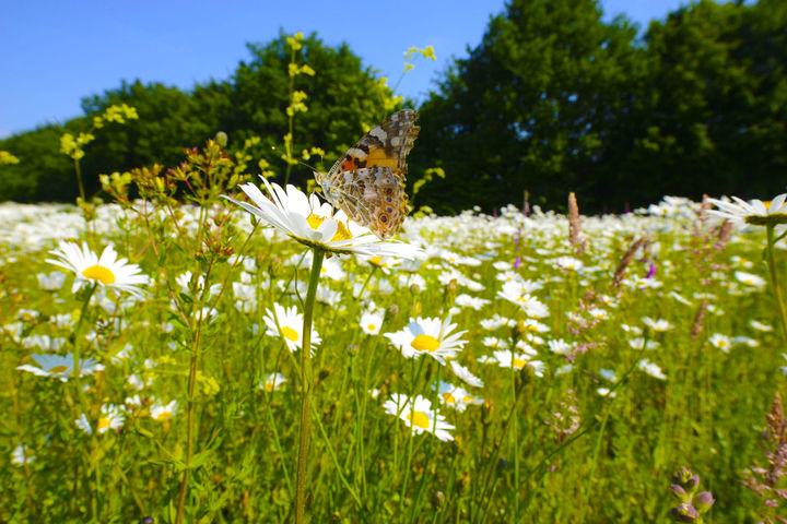 Bollen Bloeiend Voorjaar : Help insecten het voorjaar door met heem en bollen