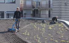 Aanleg en onderhoud van daktuinen