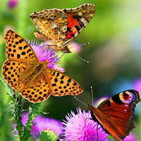 insectvriendelijke tuin