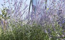 beplanting tuin venlo