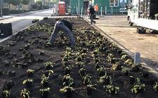 Green to Colour plantsoen Leudal tijdens aanleg