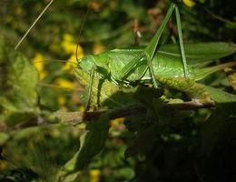 Bewust bouwen aan biodiversiteit