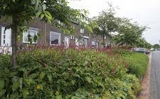 Bloeiende beplanting in stedelijke omgeving