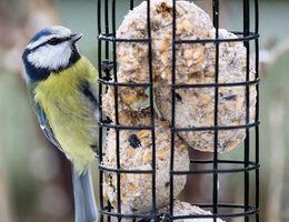 Maak een vogeltaart