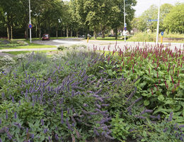 Green to Colour Weert