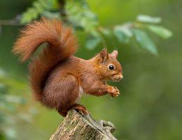Voedsel voor eekhoorns, egels en vogels