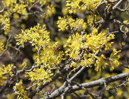 plant van de maand maart