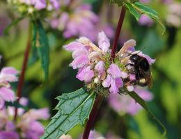 Top 5 bloeiers voor bijen