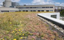 Groen dak bij KIA in Landgraaf