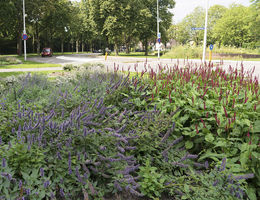 Green to Colour in Weert