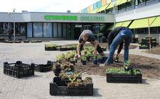 Aanplant Greentocolour Citaverde college Roermond