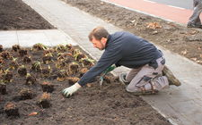 Aanleg GreentoColour tuin