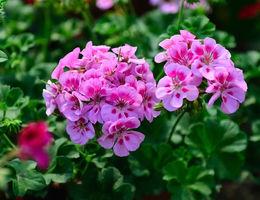 Top 5 perkplanten