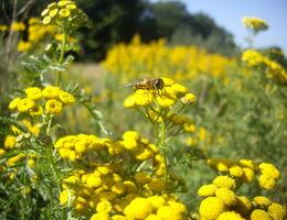 Jonkers biodiversiteit
