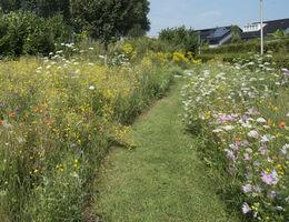 Biodiversiteit verhogen