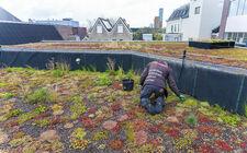 Natuurlijke daktuin op La Vie Meeting Center in hartje Utrecht