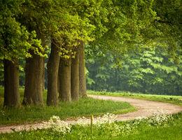Top 5 inheemse bomen