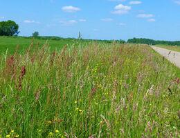 Ecologisch bermbeheer stimuleert biodiversiteit
