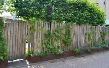 Robinia palen als natuurlijke tuinafscheiding