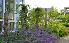 Familie Hendrikx kiest voor biodiverse en natuurvriendelijke tuin