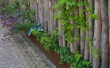 Robinia palen met daar tussen klimplanten