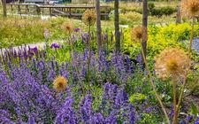 Gemeente Bergen plaatst wadi en biodiverse planten