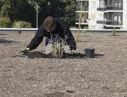 Realisatie en onderhoud daktuinen