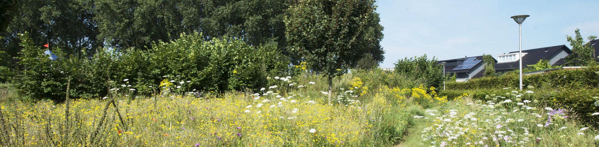 natuurlijke vegetaties