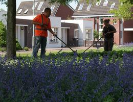 Onderhoud openbaar groen