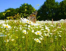 Help insecten het voorjaar door