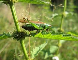 Stimuleren biodiversiteit