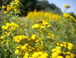 Jonkers zet zich in voor biodiversiteit