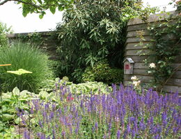 Leef gezond, vergroen je tuin