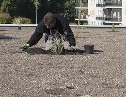 Realsiatie en onderhoud daktuinen
