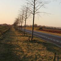 Lindebomen Venlo Greenpark